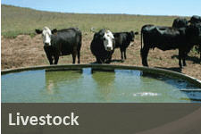 Water Use for Livestock